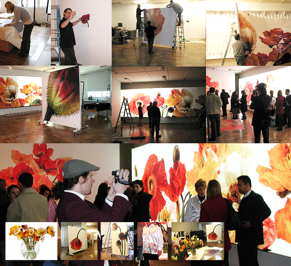 Large Format Digital Poppy exhibition -produced by TO Design